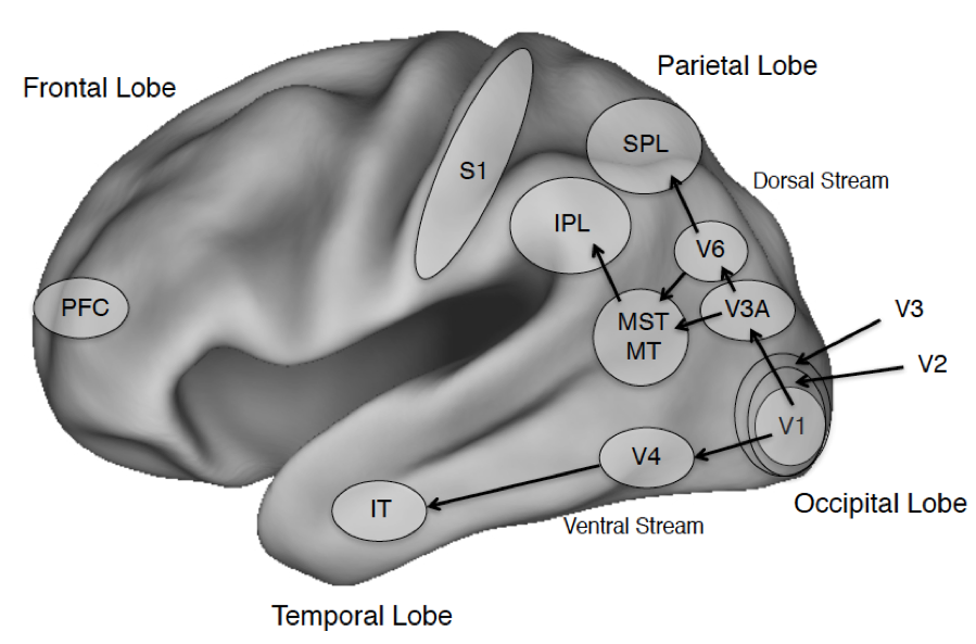 The Neuroscience of Consciousness (Stanford Encyclopedia of Philosophy)